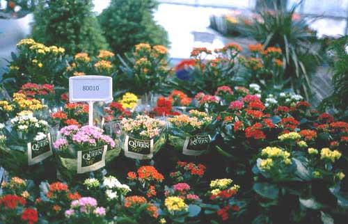 Bizkaia eus productos agr colas y ganaderos for Algunas plantas ornamentales