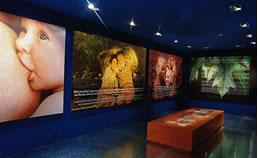 Gernikako Bakearen Museoa Fundazioaren 1. ikuspegia