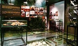 Vista 4 de Fundación Museo de la Paz de Gernika