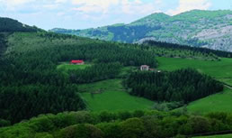 Vista 1 de Seles