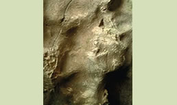 Venta Laperra kobazuloan grabaturiko irudiakren 1. ikuspegia