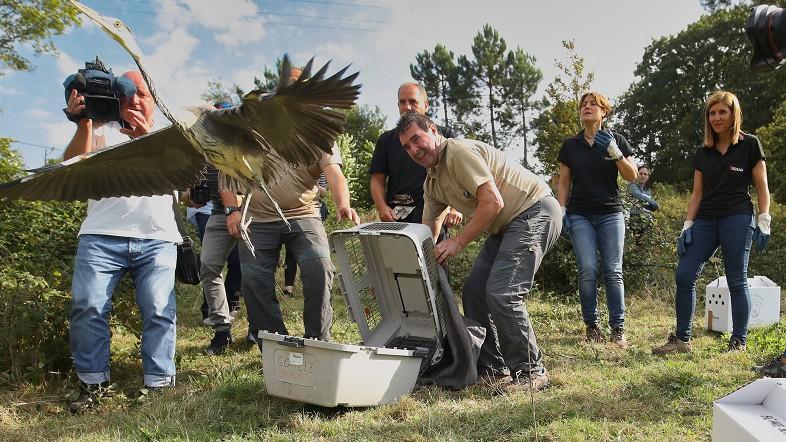 El Centro de Recuperación de Fauna Silvestre de la Diputación ha recogido 17.331 animales en sus veinte años de historia