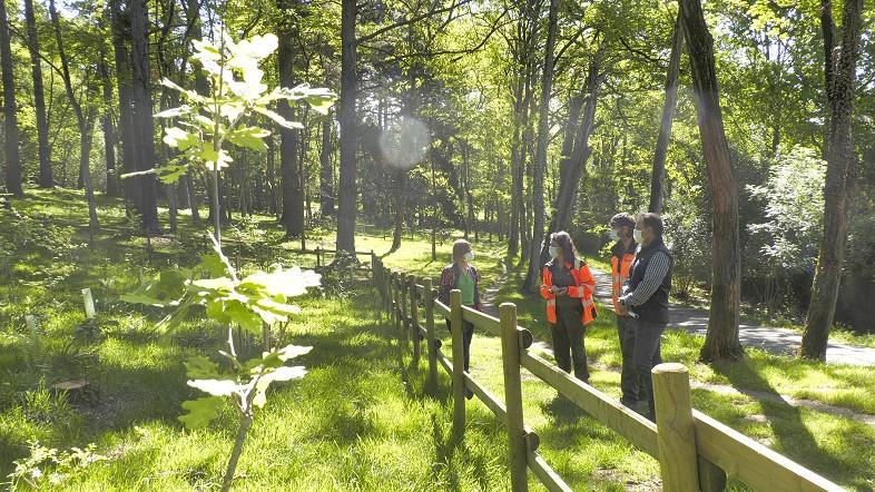 Diputación creará en Akarlanda un recorrido didáctico con especies autóctonas para dar a conocer el patrimonio forestal de Bizkaia