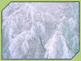 Fotografía de árboles nevados en el parque natural del Gorbea